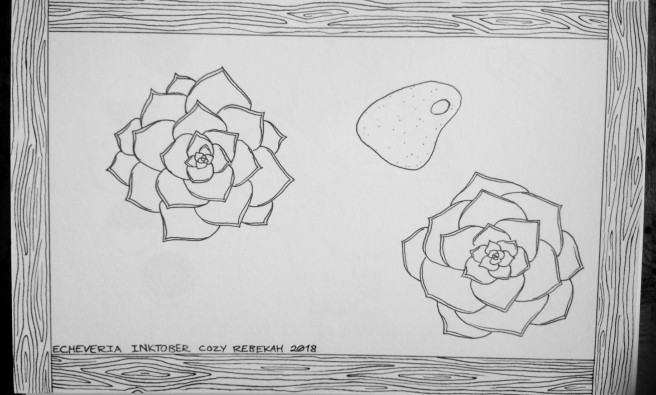 Inktober Day 18 - Echeveria by Cozy Rebekah