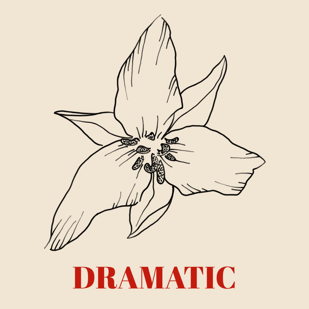 A line art drawing of a trillium against a pale background with the word 'Dramatic' written underneath it in red text.